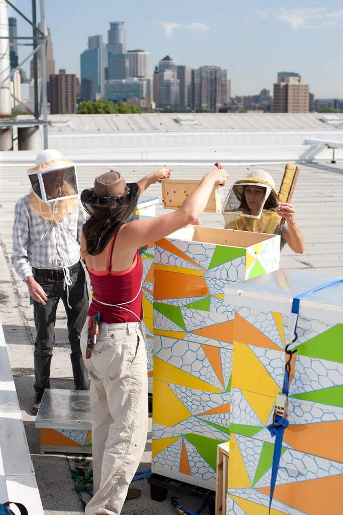 Examining the European honeybees on Mia's roof.
